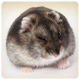 hamster-health.png