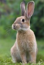 rabbit_img1